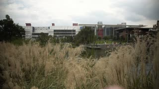 focus on tall grasses blowing in the wind in Discovery Green park  downtown Houston 4k