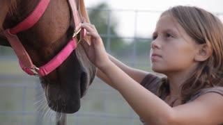 girl brushing her horse