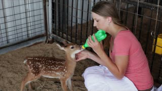 girl feeding a fawn
