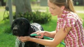 girl washing her dog