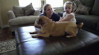 happy toddler playing with the dog while mom watches 4k