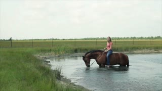 horse playing in the pond