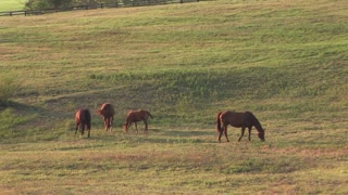 horses grazing in an open pasture