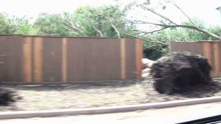 Hurricane damage driving trees down