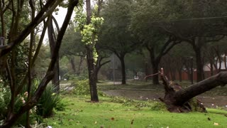 Hurricane damage fallen tree street pan