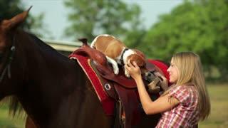 Jack-Rat Terrier Dog on Horse's Saddle