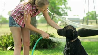Labrador Loving Bath Time