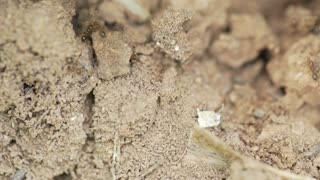 macro ants running around their nest 4k