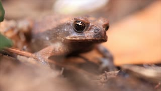 Macro view of a small brown frog