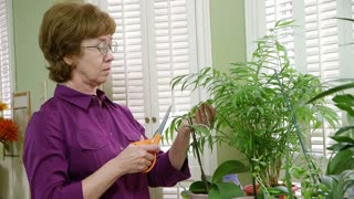 mature woman trimming her plants.