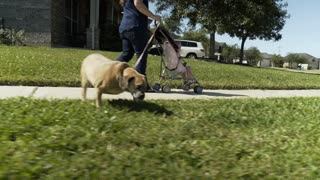 mom with her toddler and dog walking down a suburban street 4k