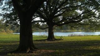 pan across old oak trees in City Park New Orleans