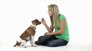 Pretty girl giving treats to her  little dog