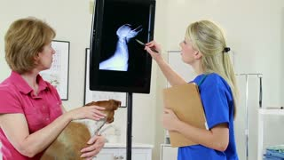 Pretty vet goes over dogs xray with owner.