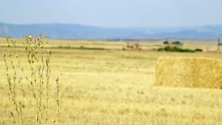 rack focus to hay in field