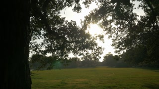 reveal from old oak tree showing sun flare in tree in City park New Orleans