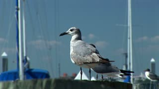 seagulls on a pier