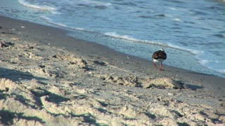 shore bird on the beach in Galveston