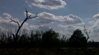 silhouette swamp tree timelapse