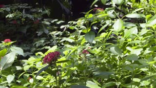 slow motion butterflies in an outdoor garden