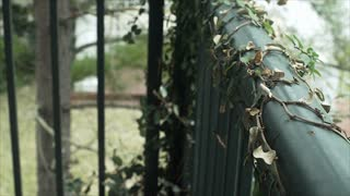 slow motion camera move across ivy covered porch railing