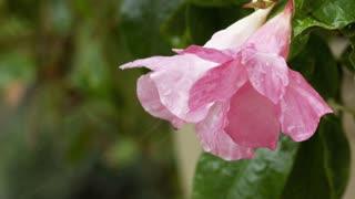 slow motion flower in the rain wide shot