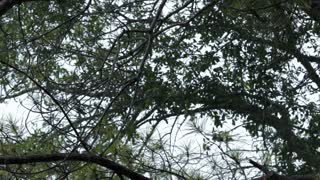 slow motion hard rain coming through trees
