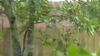 slow motion heavy rain through the tree