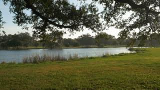 slow motion tilt to sun lit oak tree City Park New Orleans