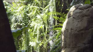 slow motion water fall with butterflies