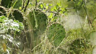 slow motion wind blowing grass in front of wild cactus plant