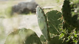 slow motion wind blowing grass with wild cactus in frame