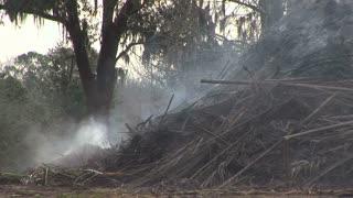 smoldering brush fire