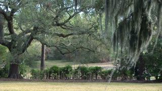southern oak landscape