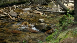 stream in the wilderness