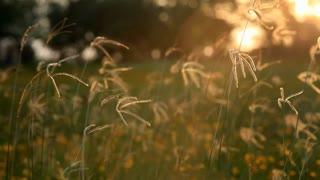 sunset grass field