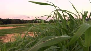 sunset overlooks tall grass