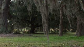 swaying moss in south Louisiana