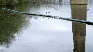 tilt from lake polution.