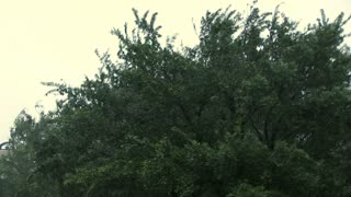 tree blowing during the hurricane storm