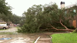 tree down after the hurricane storm