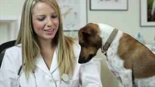 vet giving treats to the dog