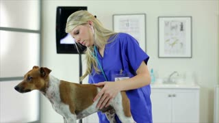 veterinarian completing her checks.
