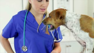 veterinarian giving treats to the dog.