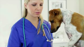 veterinarian looks at someone off camera.