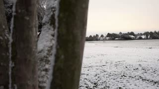 dolly reveal large snow covered field 4k