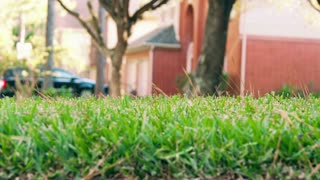 homeowner pushing a cart fertilizing his lawn slow motion