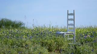 white chair in an empty field of texas bluebonnet flowers