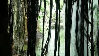 waterfall through vines 4k
