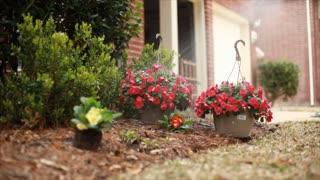watering plants in the garden